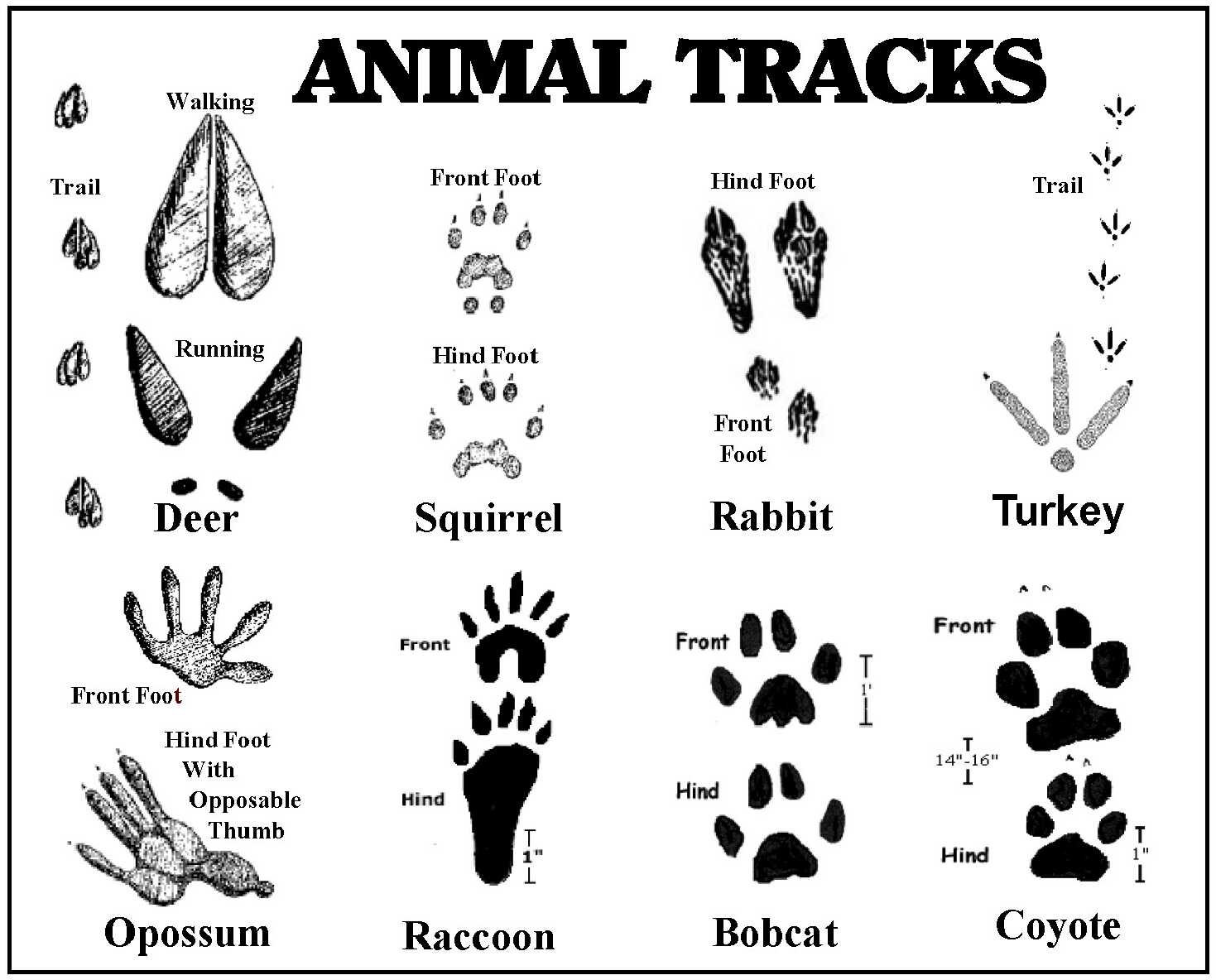 Projects besides 1997 Geo Tracker 28220896 in addition Premium as well 2398 as well 509034 Squirrel Footprints. on deer tracker